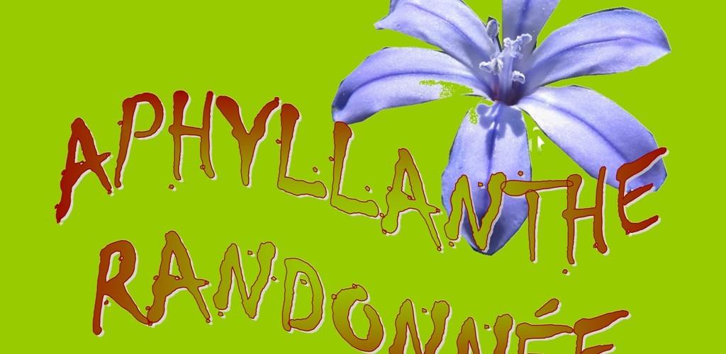 Aphyllanthe Randonnée (8)