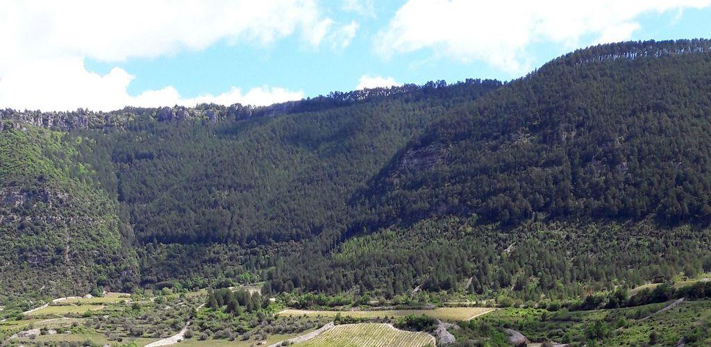 terrasses-pégairolles 1 5-3 CDRP34
