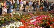 LE MARCHÉ AUX FLEURS ET AUX PLANTS