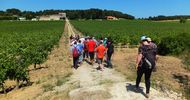 WINE-MAKING HIKE - CAMPAUCELS