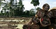 LES ECHOS DURABLES : PROMESSES ET DERIVES DE LA « MONETARISATION » DE LA NATURE