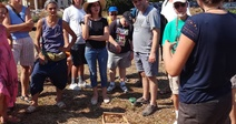 LES MERCREDIS AU PAYS : SAFRAN DES HAUTS CANTONS DE L'HERAULT