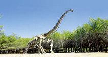 MUSEE-PARC DES DINOSAURES ET DE L'EVOLUTION