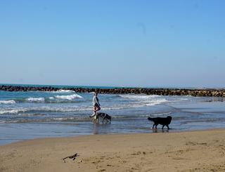 plage-vias-chiens Cp FARRET