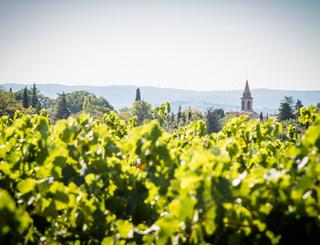 Vignoble des 2 terres (1)