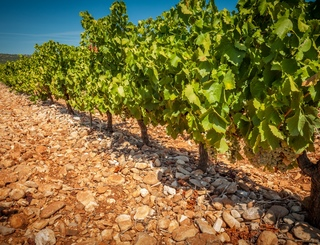 Vignoble des 2 terres (7)