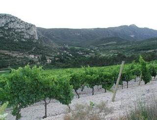 Fraisse vin 5 © S. Lhostis. OTGPSL