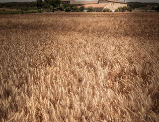 Domaine Savary de Beauregard-Montagnac_2