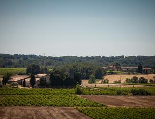 Domaine Savary de Beauregard-Montagnac_6