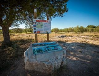 Les vignobles de Montagnac-Montagnac_17 Sud de France Développement