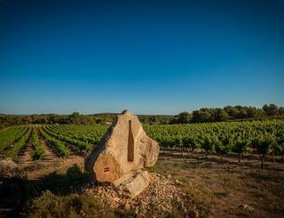 Les vignobles de Montagnac-Montagnac_19 Sud de France Développement