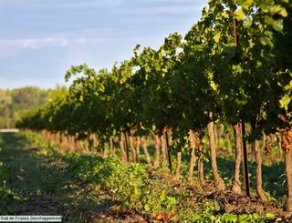 5 Sud de France Développement