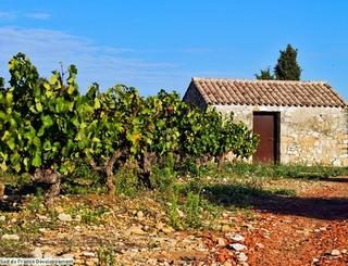 9 Sud de France Développement
