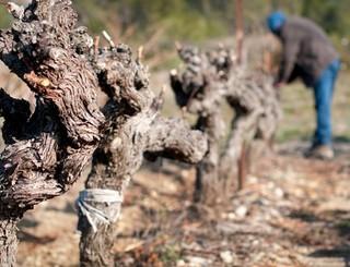 Euzet les Vignerons du Pic 5 © Les vignerons du pic