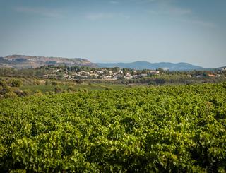 Saint Jean de l'Arbousier-Castries_0 Sud de France Développement