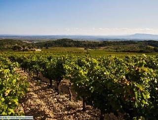 LE DOMAINE VU D'EN HAUT Sud de France Développement