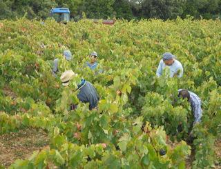 Domaine Cavailles - Minerve - vigneron Minervois ©Domaine Cavailles - Minerve - vigneron Minervois