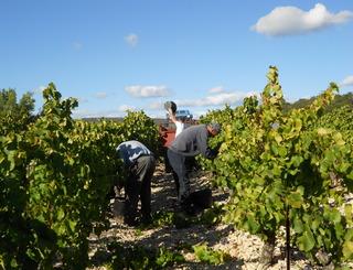 Domaine Cavailles - Minerve - vigneron Minervois ©Domaines Cavailles - Minerve - vigneron Minervois