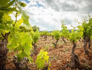 Domaine des Grandes Costes-Vacquières_2 Sud de France Développement