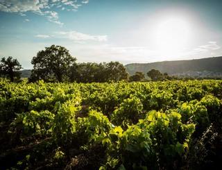 Domaine des Grandes Costes-Vacquières_20 Sud de France Développement