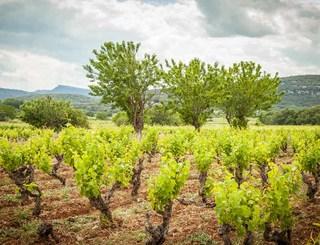 Domaine des Grandes Costes-Vacquières_3 Sud de France Développement