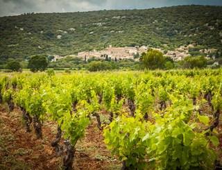 Domaine des Grandes Costes-Vacquières_4 Sud de France Développement