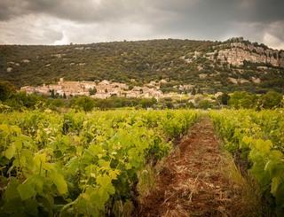 Domaine des Grandes Costes-Vacquières_5 Sud de France Développement