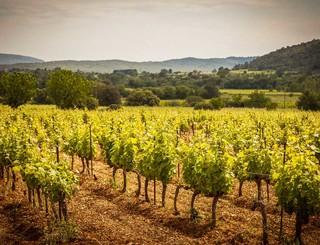 Domaine des Grandes Costes-Vacquières_1 Sud de France Développement