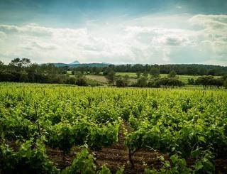 Domaine des Grandes Costes-Vacquières_10 Sud de France Développement