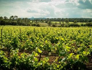 Domaine des Grandes Costes-Vacquières_12 Sud de France Développement