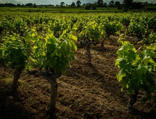 Domaine des Grandes Costes-Vacquières_13 Sud de France Développement