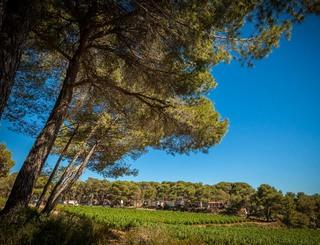 Camping résidentiel La pinède-Castelnau de Guers_20 Sud de France Développement