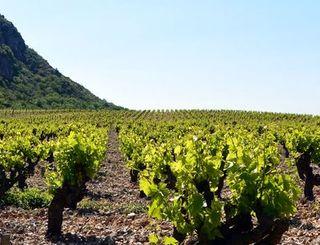 lauroux-vignes ADT34-GD