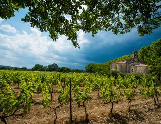 Vignes en paysages 2 Régis Domergue
