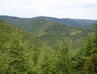 Forêt aux environs d'Avène_Sylvie HERPSON Sylvie Herpson PHLV