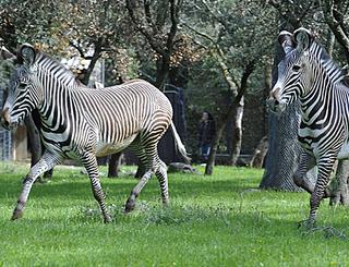 zoo2@ville Ville de Montpellier