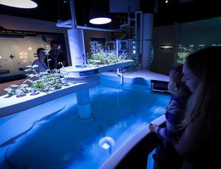 aquarium mare nostrum de montpellier m 201 diterran 201 e m 201 tropole montpellier