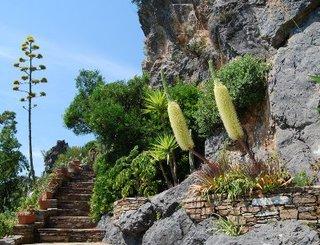 PCU - Jardin Méditérranéen - 003 - Agaves bracteosa © C.Pialot