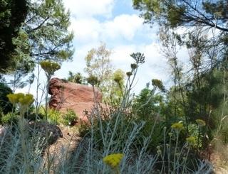 Parc floral 5 Continents.500x300Bush E. DUBOIS