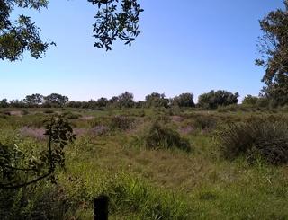 paysage sansouire maison de la nature