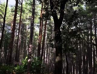 Forêt de l'Usclade S.Collon