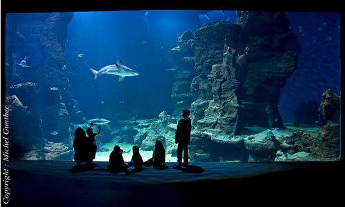 aquarium mare nostrum montpellier