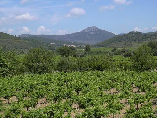 Cabrières et ses vignes Gîtes de France